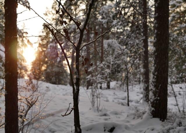 Kuva, jossa aurinko paistaa puiden takaa.