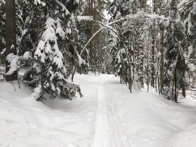 Kuva, jossa tien ylle kaartuvat puut.