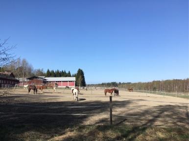 Kuva, jossa hevosia laitumella