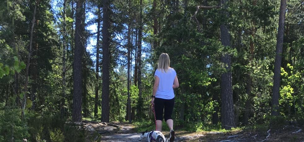 kuva, jossa koira hihnassa metsassa