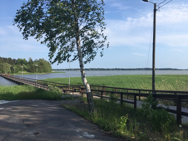 Kuva, jossa koivu, meri ja silta.