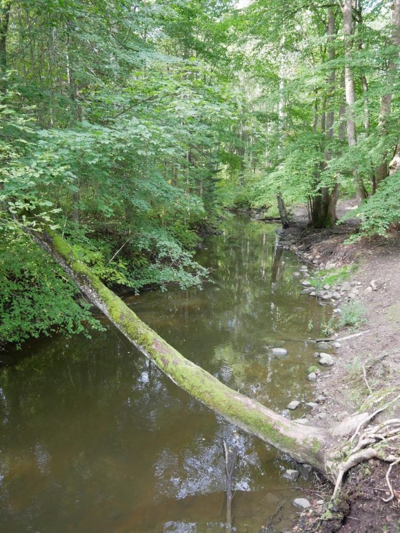 kuva, jossa puro