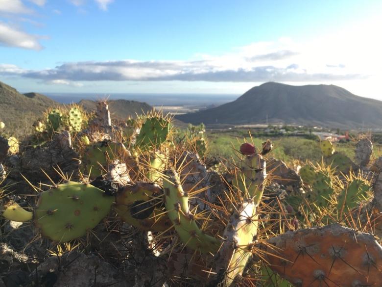 atlantti teneriffa kaktus polkujuoku