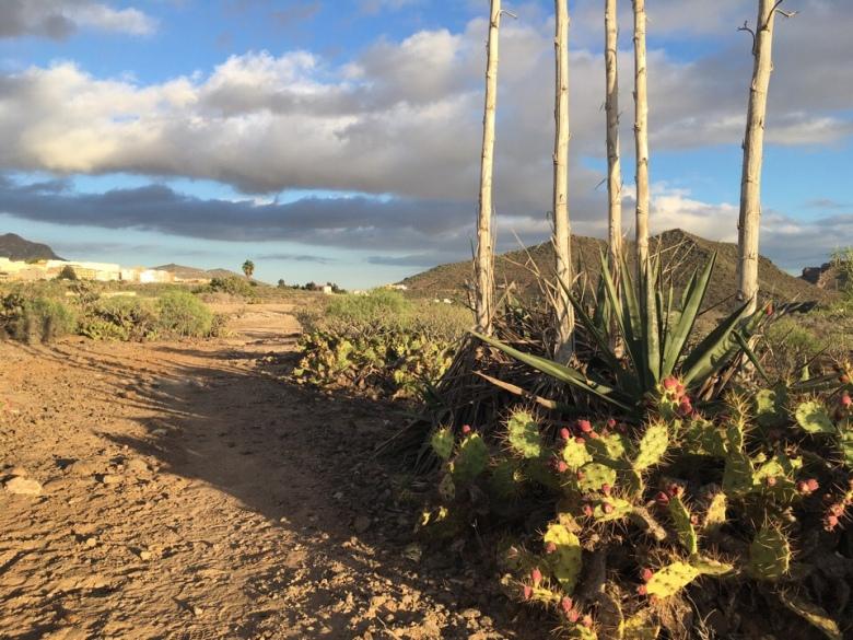 Teneriffa polkujuoksu, juoksu, kaktukset, hiekkatie