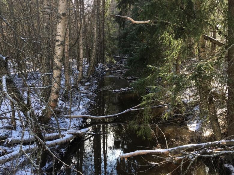 puro ja kaatuneet puut
