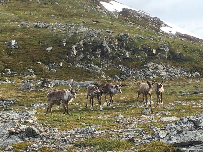 poroja pohjois norjassa