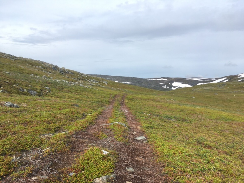 trail running in seljenes norway