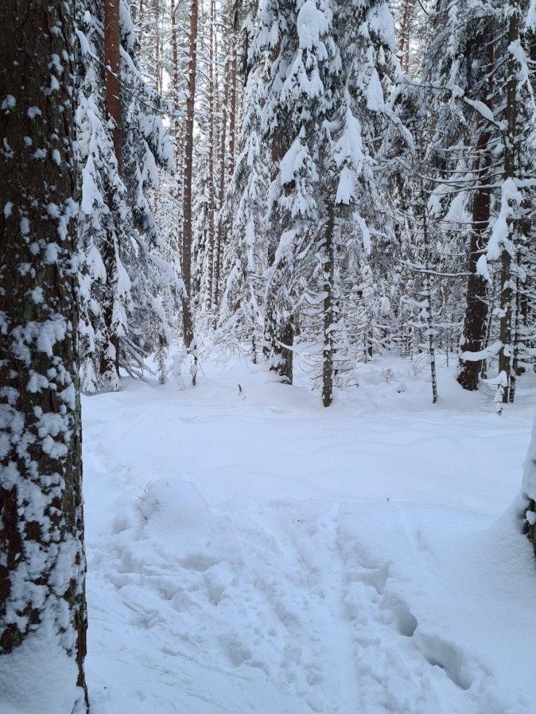 kuva, jossa lumisia mantyja