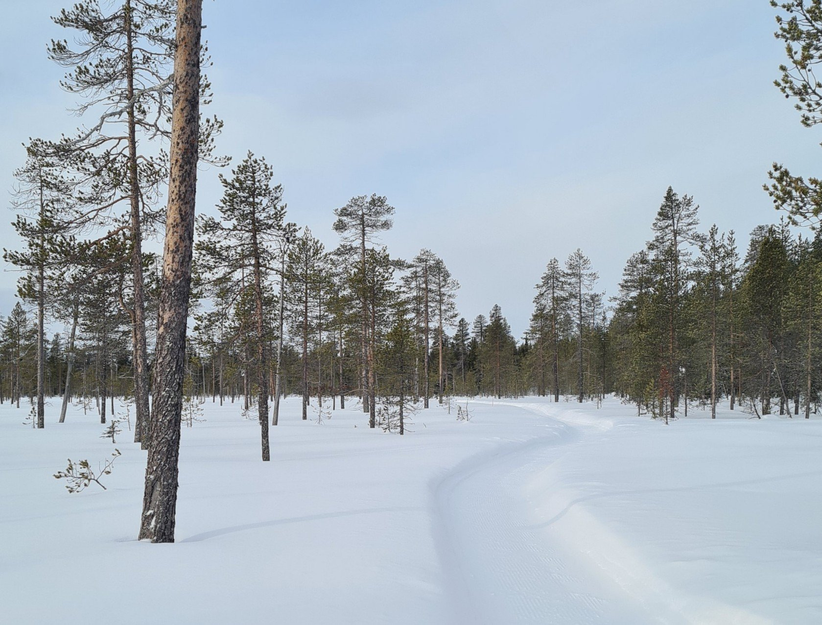 talvipolku yllaksella